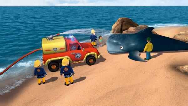 Mandy und Norman haben am Strand einen gestrandeten Wal entdeckt. Feuerwehrmann Sam uns seine Crew helfen dem Tier zurück ins Wasser. | Rechte: KiKA/HIT Entertainment