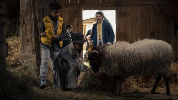 Die Kinder (Paul (Sanusi Bah), Samuel (Andre Mueras Jimenez), Sidra (Hannie Boon)) entdecken in der Scheune das Schaf Olli. | Rechte: KiKA/MDR/TELLUX film/CROSS MEDIA/Conny Klein