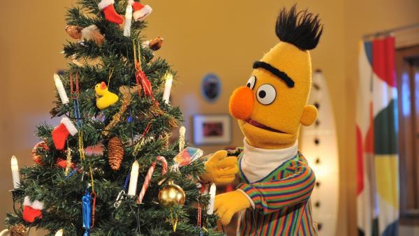 Bert übernimmt das Schmücken des Weihnachtsbaumes. | Rechte: NDR/Boris Laewen