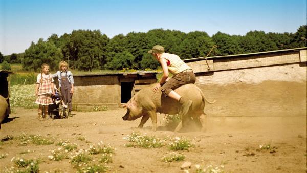 Max (Konstantin Kaucher) zeigt seinem Bruder Leo (Karl Alexander Seidel) und Emma (Zoe Charlotte Mannhardt) wie gut er auf einem Schwein reiten kann - das soll ihm erst einmal jemand nachmachen. | Rechte: ZDF/Wolfgang Jahnke