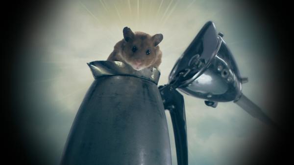 Stijn ist untröstlich: sein Hamster Frank liegt tot im Käfig. Wie kommt Hamster Frank in den Hamsterhimmel? | Rechte: SR/EBU