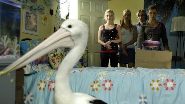 Cleo (Phoebe Tonkin, re.) versucht den Pelikan einzufangen, den ihre kleine Schwester ins Haus geschmuggelt haben muss.   Rechte: ZDF/Jasin Boland
