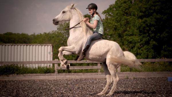 Am Anfang war Charly misstrauisch und verstört. Gemeinsam mit ihrer Mutter hat Mia das Pferd gezähmt. | Rechte: MDR/Cine Impuls