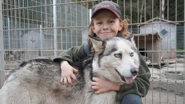 Kimik (10) lebt mit seiner Familie und 28 Sibirischen Huskys im Erzgebirge. Am liebsten ist er mit dem Hundeschlitten unterwegs und lässt sich von seinen Huskys durch die Wälder ziehen. | Rechte: MDR/Martin Reißmann