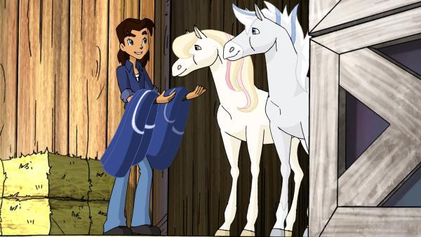 Benny bringt die zwei Fohlen, die für ein paar Tage in der Obhut von Horseland bleiben, in den Stall. Bald dreht sich alles nur noch um die Kleinen, und die erwachsenen Pferde finden das gar nicht gut. | Rechte: ZDF/Dic Entertainment Corp.