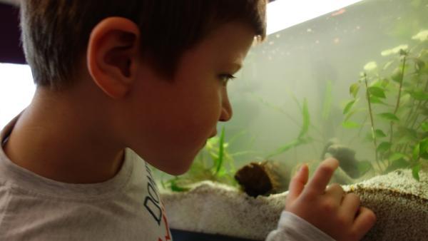 Nun kann er die Fische gut beobachten. | Rechte: ZDF/Studio.TV.Film GmbH