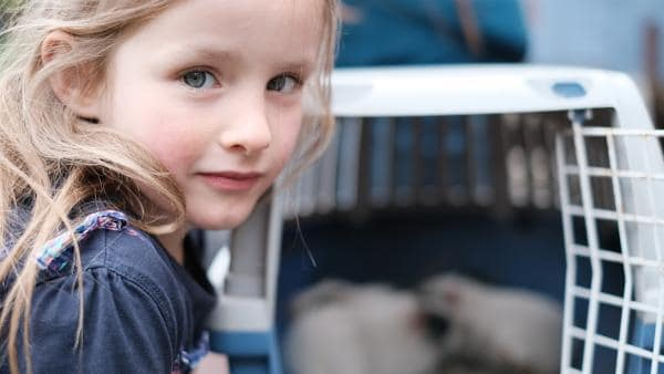 Malou schließt die Meerschweinchen in ihr Herz und kümmert sich um die neuen Mitbewohner.   Rechte: ZDF/Studio.TV.Film GmbH