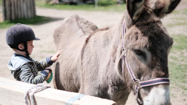 Franz darf heute zum ersten Mal auf einem Esel reiten. Doch bevor es los geht, müssen sich die beiden erst mal kennenlernen. | Rechte: ZDF/Studio.TV.Film GmbH