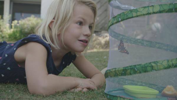 Joelle liebt Schmetterlinge, doch in ihrem Garten gibt es immer weniger bunte Flattermänner. Sie beschließt ihre eigenen Schmetterlinge zu züchten und freizulassen. | Rechte: ZDF/Media Atelier GmbH