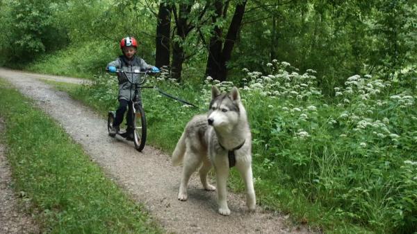 Sid lässt sich von Husky Bacon bei einem Waldausflug ziehen. | Rechte: KiKA/Monika Gröller