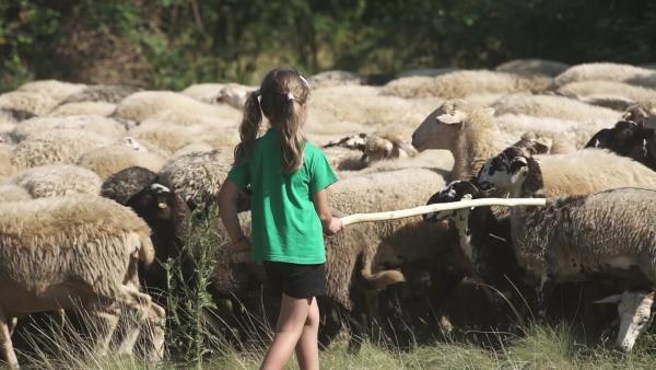 Die Schafe haben Hunger. Zusammen mit dem Hütehund treibt Ingrid (6 Jahre) die Herde auf eine neue Weide. Ein besonderes Auge hat sie auf ihr Lieblingsschaf Kokolina. | Rechte: ZDF/RAI