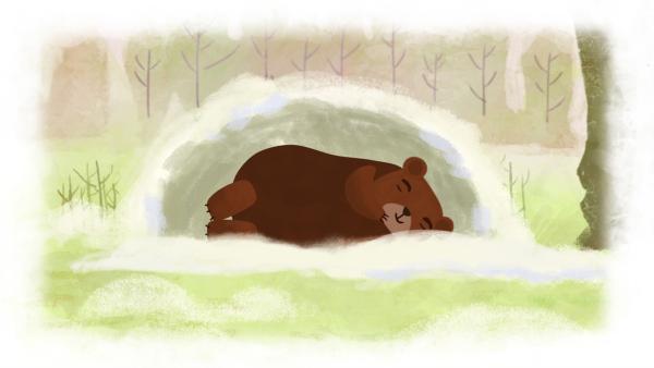 Der Bär macht Winterschlaf. | Rechte: SWR