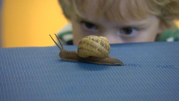 Kinderreportage: Kinder kommen dem Geheimnis der Tiere auf die Spur.<br/>Wie kommt die Schnecke eigentlich voran? | Rechte: SWR