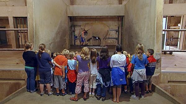 """In der """"Ich kenne ein Tier""""- Doku finden Kinder mit einer Elefantenwaage heraus, wie schwer ein Elefant ist und wie viele Kinder es braucht, um genau so schwer zu sein, wie ein Elefant.   Rechte: SWR"""
