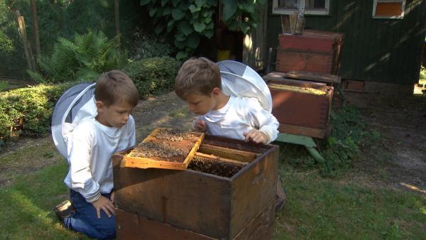 Jakob und Simon haben einen eigenen Bienenstock. Bienen können stechen, aber die beiden haben keine Angst. | Rechte: SWR