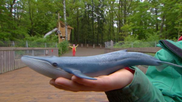 Ein Wal ist riesig groß. So groß, dass man es sich kaum vorstellen kann. Eine Kindergruppe versucht es trotzdem und findet lustige Vergleiche für die Größe eines Wals. | Rechte: SWR