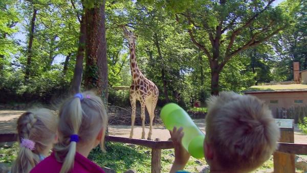 Kinder schauen sich im Zoo eine Giraffe an  | Rechte: KiKA