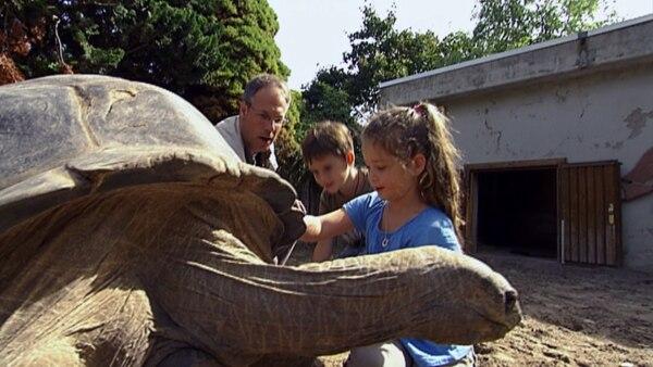 Schildkröten können ganz schön groß werden. Und Riesenschildkröten brauchen viel Pflege.  | Rechte: KiKA