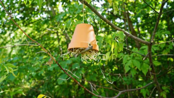 Ohrwurmhotel hängt an einem Baum | Rechte: kika