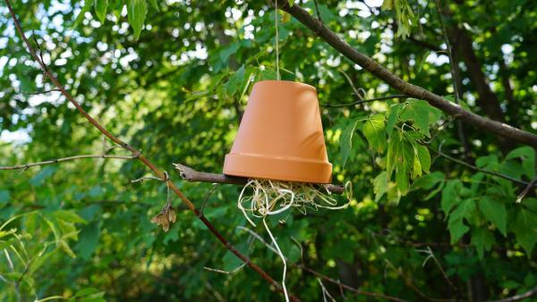Ohrwurmhotel hängt an einem Baum   Rechte: kika