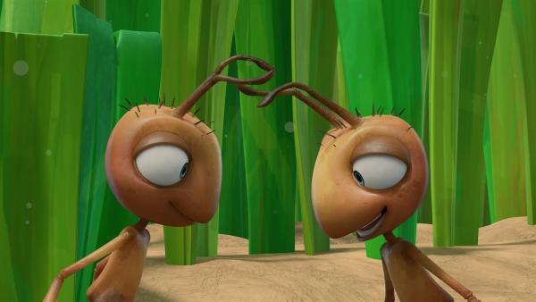 Die Ameisen übergeben sich mit ihren Fühlern eine Nachricht.   Rechte: KiKA/One Animation PTE LTD.