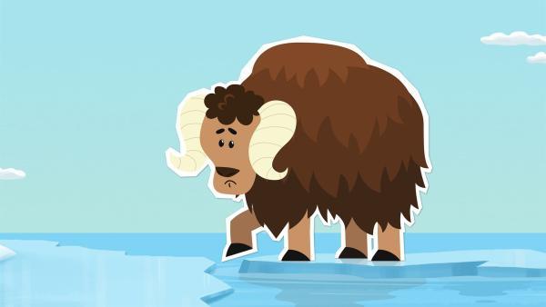 Der junge Moschusochse Willy ist aus seiner Heimat, der Tundra, mit einer Eisscholle zum Nordpol abgetrieben worden. Er ist furchtbar ängstlich und traut sich den Sprung von der Eisscholle ans Festland nicht zu. Wie soll er den Weg nach Hause schaffen?   Rechte: ZDF und JEP-Animation GmbH