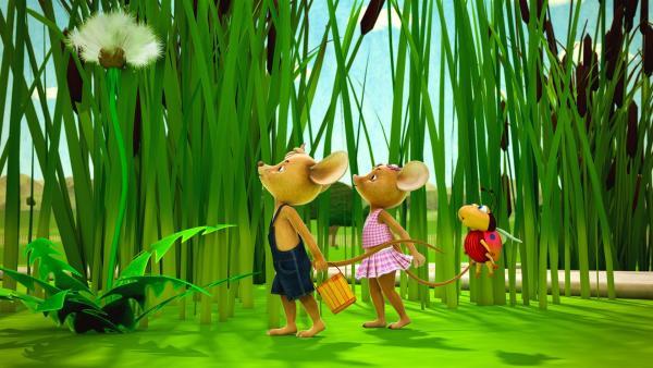 Heute ist Pusteblumentag. Jo, Naya und Ludwig pusten mit aller Kraft. Denn wer später die meisten der fliegenden Schirmchen fängt, hat gewonnen. | Rechte: ZDF/Scopas Medien AG