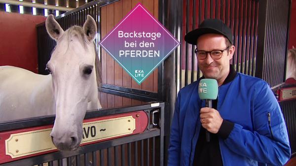 Ben backstage bei den Pferden am Set von Ostwind 5  | Rechte: KiKA