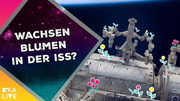 Astrofrage: Kann eine Blume in der ISS wachsen? | Rechte: KiKA / NASA / ESA / Colourbox