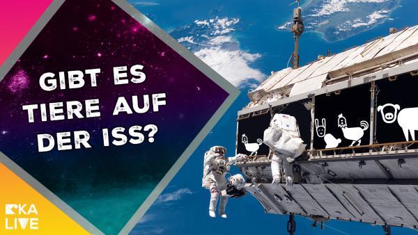 Astrofrage: Könnte man Tiere auf der Raumstation halten? | Rechte: KiKA / NASA / ESA / Colourbox