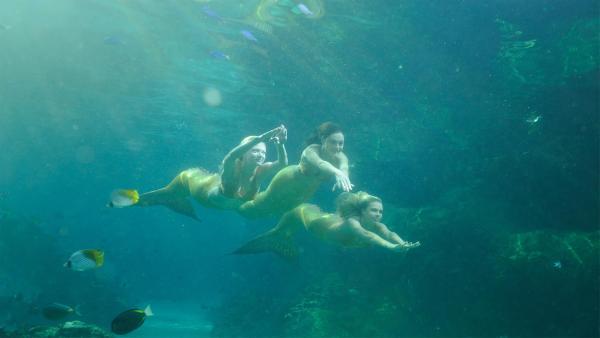 Down Under bei ZDFtivi mit H2O - Plötzlich Meerjungfrau | Rechte: ZDF