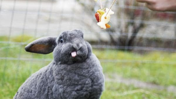 So lecker kann Gemüse sein! | Rechte: Lieblingsmöhre
