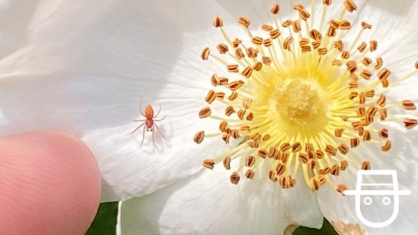 Insektenfoto Ben - Spinne | Rechte: KiKA