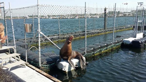 Im Marine Science Center in Rostock wird das Verhalten von Seehunden, Seelöwen und Seebären erforscht. | Rechte: KiKA/Stephanie Paersch
