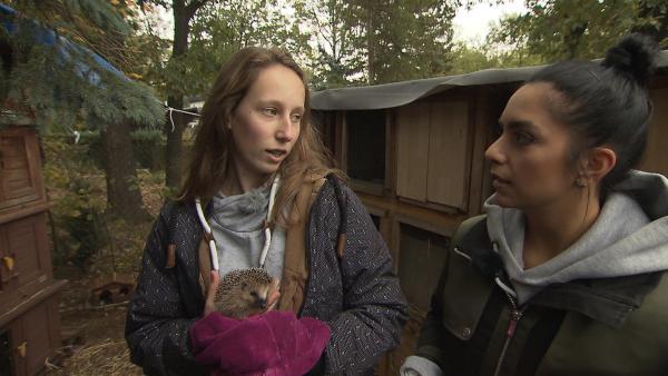 Jess schaut sich an, wie Igel in einer Wildtierstation gepflegt werden.   Rechte: KiKA