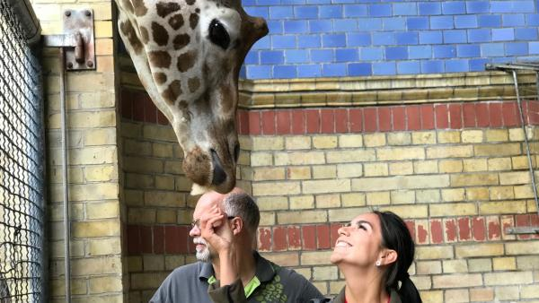 Jess hat Knäckebrot für Giraffe Max. | Rechte: KiKA/RozhyarZolfaghari