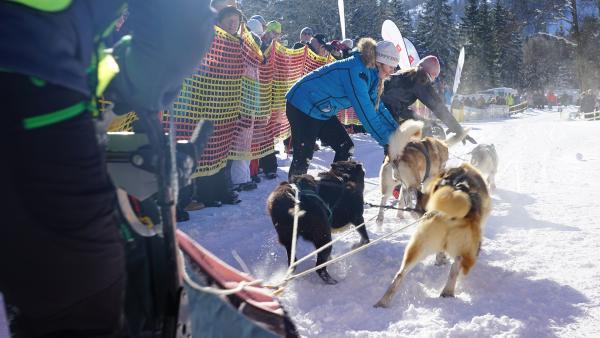Alina muss helfen, wenn ihre Eltern beim Rennen mitmachen. Sobald die Hunde an der Startlinie stehen, wollen sie losrennen. | Rechte: KiKA/ Franziska Gruber