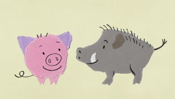 Schweine und Wildschweine | Rechte: KiKA