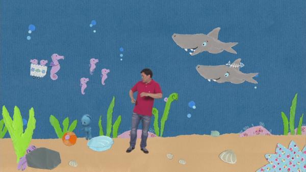 Zu Besuch bei den Haien | Rechte: KiKA