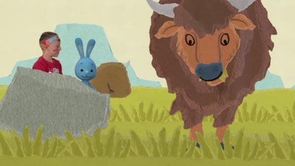 Anschleichen an eine Bisonherde | Rechte: KiKA
