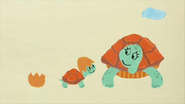 Eine Schildkröte mit Helm | Rechte: KiKA