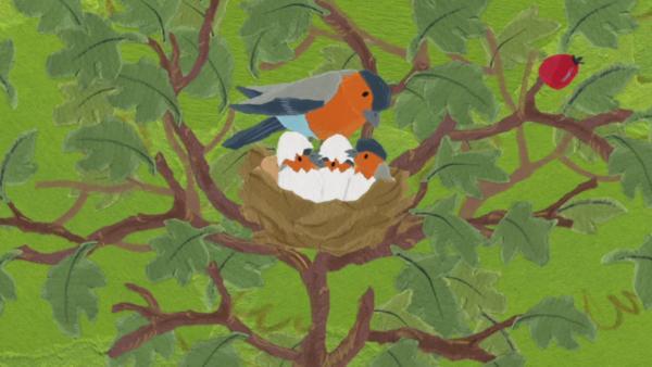 Anni und Kikaninchen entdecken das Vogelnest | Rechte: KiKA