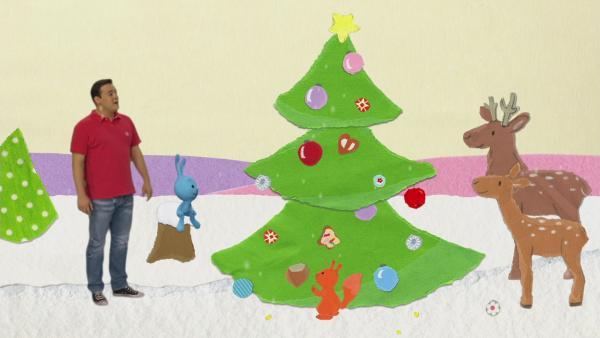 Ein geschmückter Tannenbaum im Weihnachtswald | Rechte: KiKA