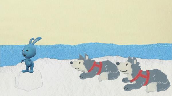 Eine lustige Fahrt mit dem Hundeschlitten | Rechte: KiKA
