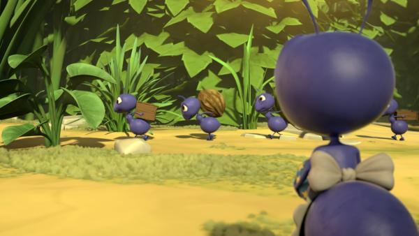 Anna Ameise (re.) beobachtet andere Ameisen, wie sie zu einem Ameisenhaufen laufen. Noch nie in ihrem Leben hat Anna andere Ameisen gesehen. Anna verspürt eine große Sehnsucht ihnen zu folgen. | Rechte: ZDF/2019 METHOD ANIMATION/BIDIBUL PRODUCTIONS/ZDF ENTERPRISES