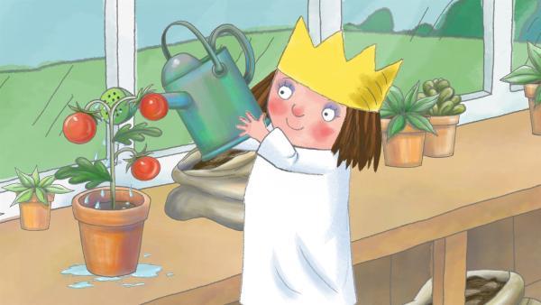 Die kleine Prinzessin pflegt und hegt ihre Tomatenpflanze. | Rechte: ZDF/Illuminated Film Ltd.