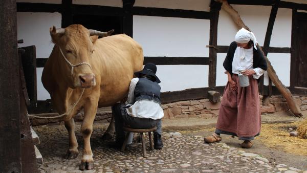 In einem echten Bircher Müsli darf Milch nicht fehlen. In der Vergangenheit muss Paul sie frisch melken. | Rechte: ZDF/Oliver Landgraf