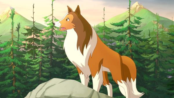 Lassie ist stets hilfsbereit. | Rechte: ZDF/Classic Media/DC Entertainment/Superprod