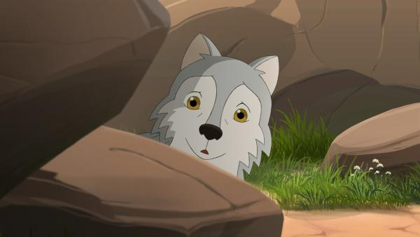 Zoe hat einen kleinen Wolf entdeckt, der ganz alleine zu sein scheint.   Rechte: ZDF/Classic Media/DC Entertainment/Superprod