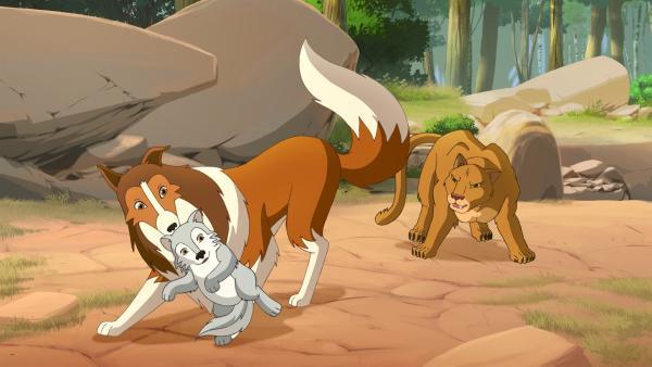 Todesmutig rettet Hündin Lassie den kleinen Wolf vor dem Berglöwen. | Rechte: ZDF/Classic Media/DC Entertainment/Superprod